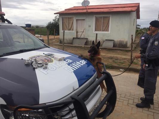 Polícia usa cães farejadores contra o tráfico de drogas em Itapemirim
