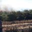 Fogo destrói parte de restinga da APA Guanandy em Itapemirim