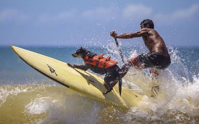 Maya representa o ES no Mundial de Surf Dog, na Califórnia