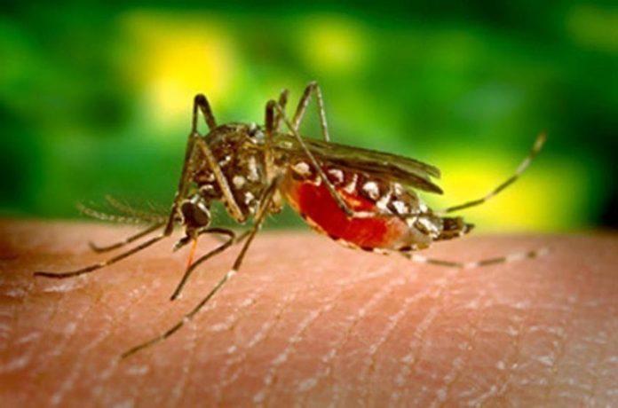 Febre alta, dor no corpo e coceira são sintomas da dengue